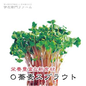 【蕎麦スプラウト】は、とっても栄養豊富です!